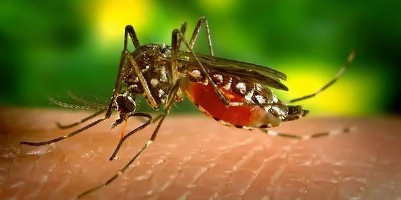 Prevención Dengue